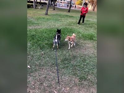 狗未繫繩咬傷其他狗 大媽卸責瞎掰理由