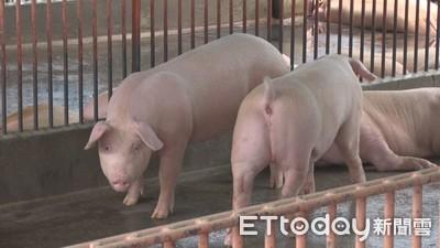 農曆年前22縣市舉辦非洲豬瘟演習