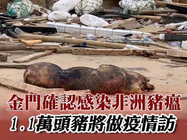 快訊/金門死豬確認感染非洲豬瘟!1.1萬頭豬將做疫情訪視