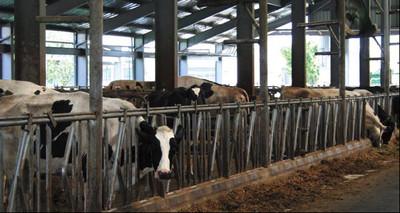 酪農業沒人做 農委會將招400名外勞