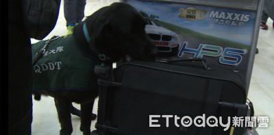 小港機場防疫犬剩5組 剩8成防護