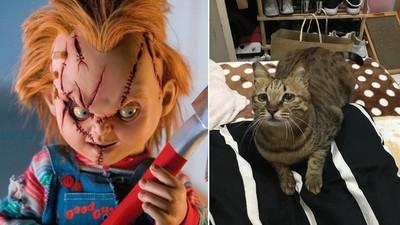 動物溝通貓咪爆「家裡有臉爛爛的人」 全家嚇壞:真有看到詭影