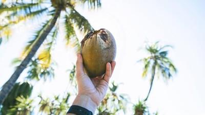 能防失智?椰子油的洗腦行銷與真相 醫學院教授:勿忘斯里蘭卡