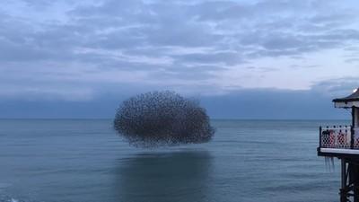 「神秘黑影」不規則飛舞 英國海岸特殊奇景 本體令人出乎意料