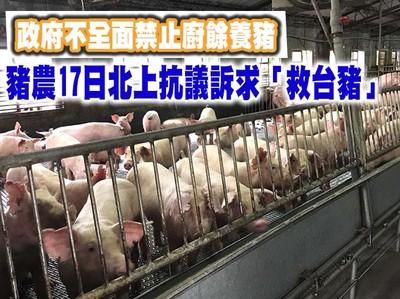 「禁廚餘、救台豬」豬農17日北上抗議