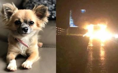 吉娃娃衝回火場救主 命喪爆炸中