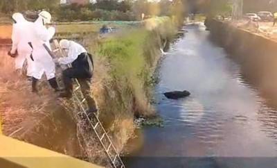 死豬死狗放水流 遏止陋俗待重視