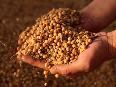 陸開放1千萬噸免關稅配額 進口美黃豆