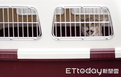 綠委提設「寵物返鄉車廂」 雙鐵回應了