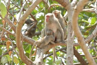 台灣獼猴等8種動物 被踢出保育類