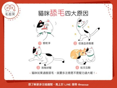 貓咪為啥愛舔毛?「4關鍵原因」曝光...舔一下超放鬆der~