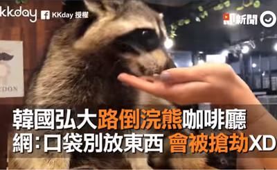 韓浣熊咖啡廳「路倒」戲碼萌翻網