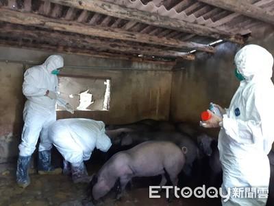 廚餘豬轉型 竹市加碼補助至2500