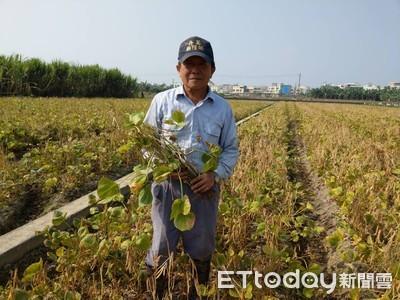 70歲陳正洲 豐收萬丹紅豆