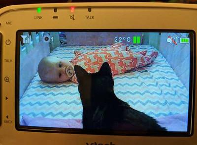 妹控貓半夜顧寶寶 媽開監視器暖暈