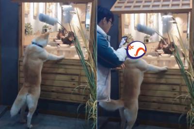 秋田站拉麵店外 被拍肩臉超臭
