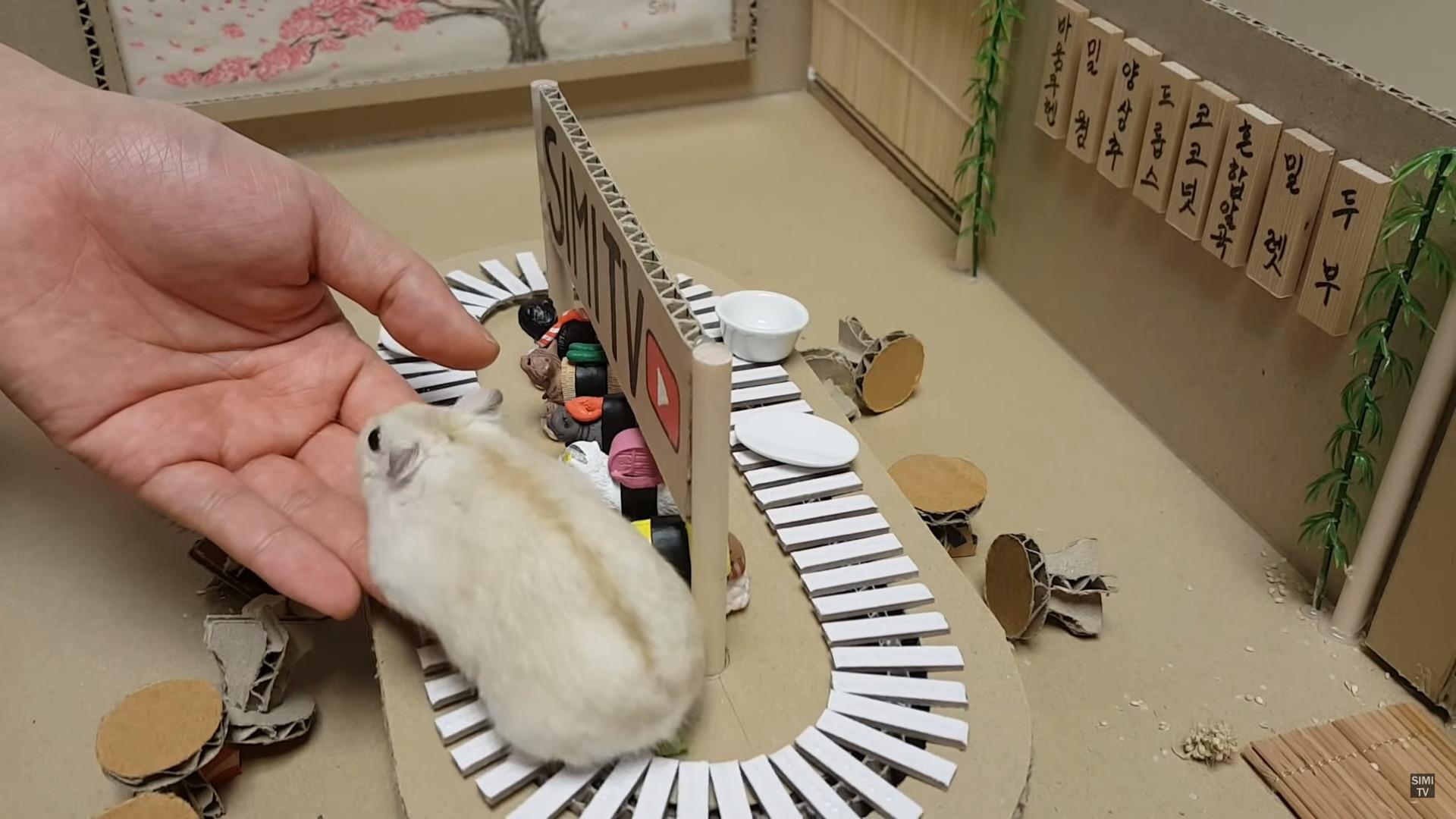 ▲▼倉鼠旋轉壽司店(圖/翻攝自Youtube@SIMI TV)