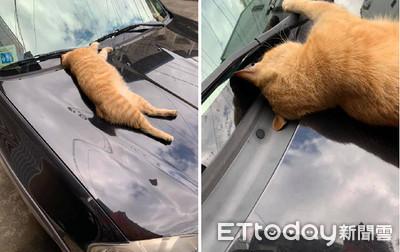 貓引擎蓋上狂睡 頭饋玻璃裝車禍
