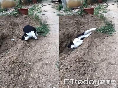 賓士貓問號臉 綜藝摔滑進土坑