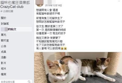 虐童堂姐家中有貓 動保處回應了