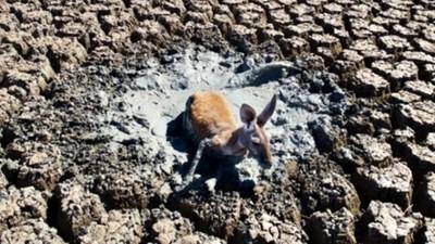 拿到「袋鼠受困畫面」攝影師拍完就離開!網一面倒痛批:你是兇手