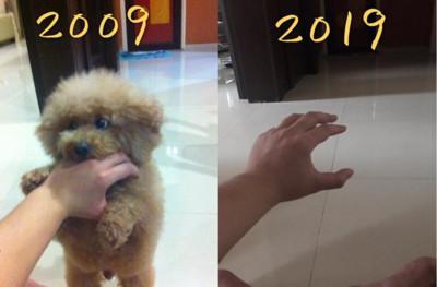 養狗10年!他手裡全空了:剩1撮毛