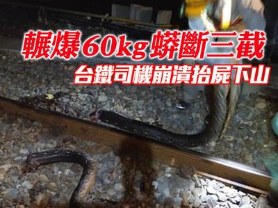 60kg巨蟒斷三截 台鐵司機下車傻住