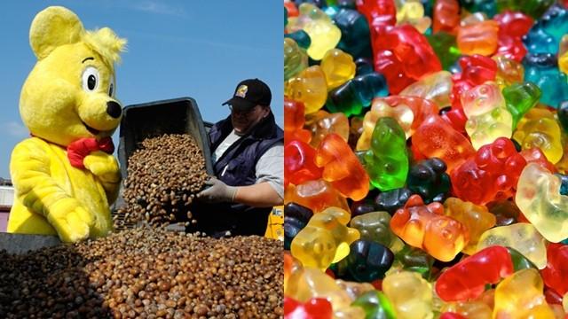 5kg橡實換1kg小熊軟糖! 80年來HARIBO請冬飢松鼠吃愛心餐