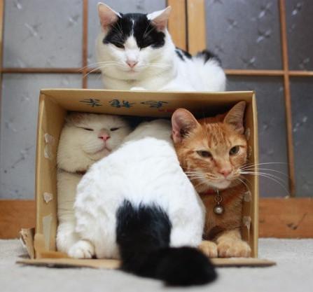 ▲貓。(圖/ETtoday資料照)