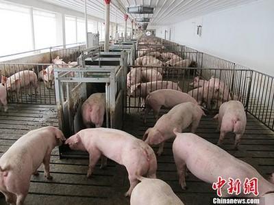 陸國新辦:非洲豬瘟防控取成效