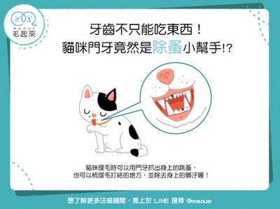 不只能吃東西!貓咪門牙竟有「超神功用」...跳蚤碰到都怕