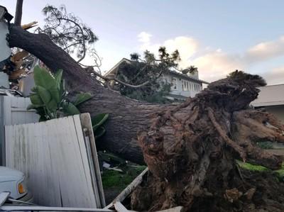 大樹倒向他家...一對夫妻雙亡