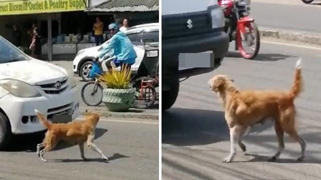 悲!狗媽媽「肉身擋車對人類吠叫」求援 幼犬遭輾倒臥路邊奄奄一息