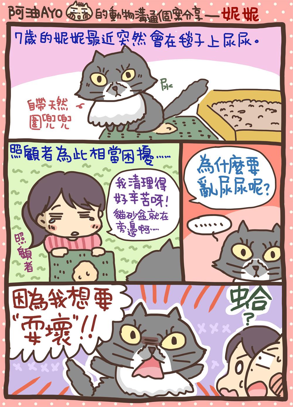 ▲貓咪。(圖/阿油妮妮提供,請勿隨意翻拍,以免侵權。)