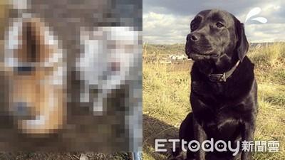 愛犬走失飼主哭斷腸!三天後…牠帶了兩個要飯的新朋友回家