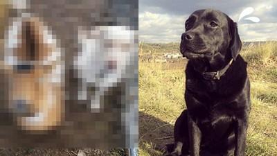 名犬BOBO走失飼主哭斷腸!三天後…牠帶了兩個要飯的新朋友回家