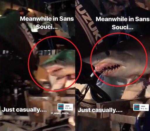 2.4m巨鯊頭「卡車尾」上下狂晃! 「圓眼+張嘴尖牙」讓駕駛全嚇傻