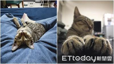 貓咪的尾巴很忙! 主子肢體語言傳遞了什麼訊息?