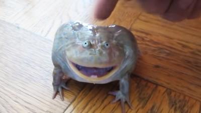 最新萌寵「小丑蛙」醜得可愛 輕摸頭頂,聽牠嚎啕大哭超療癒!