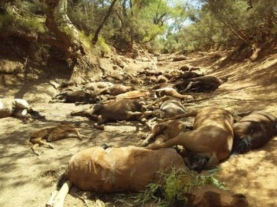 40馬屍躺乾水道 極端氣候影響6000萬人