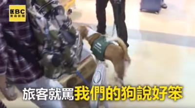 護國神犬守疫情被罵 旅客:笨狗很髒