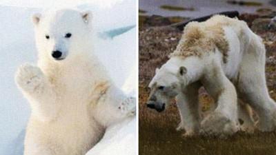 「地球版#10年挑戰」森林變沙地、北極熊暴瘦,人類還有幾年可揮霍?