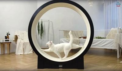 貓咪「減肥專用跑步機」根本大型倉鼠滾輪 願意上去的就不叫主子了!