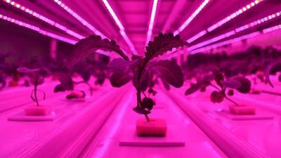 為了吃飯森林砍光光!大樓變身「隱形農場」 垂直農法爆產量救地球