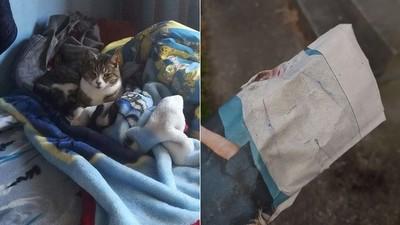 沒訂報紙卻一直收到 「兇手」天天翻牆到我家...這是貓的報恩嗎