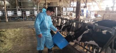 解決酪農缺工!農委會補助66台自動化設備
