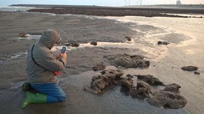 申請保育藻礁活動遭拒!桃園市政府挨轟