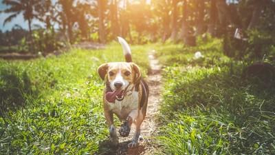守住狗年最後好運!「立春開運法」這天正午曬太陽 帶財貴氣進豬年