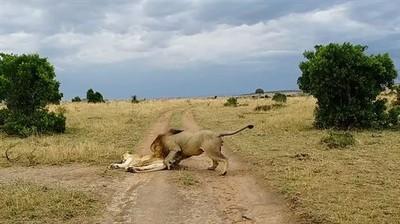 公獅偷襲老婆大人 下秒引爆河東獅吼