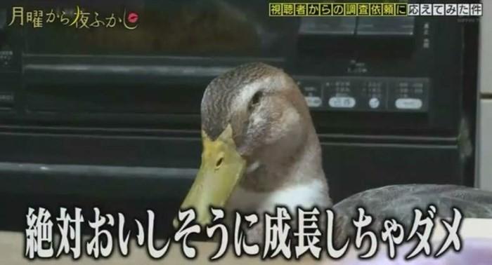 ▲▼超愛吃鴨子的奶奶。(圖/翻攝自Youtube)